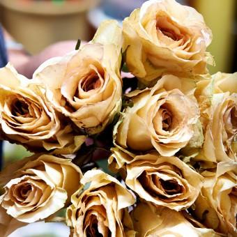 Så smukt kan roser tørres i råhvide farver.